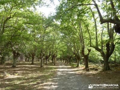 Parque Natural Gorbeia - Hayedo de Altube - Cascada de Gujuli;compañeros para viajar recorrido por